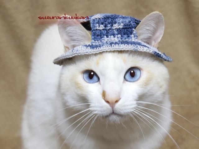 【猫用】編みカンカン帽3 2074<青系...