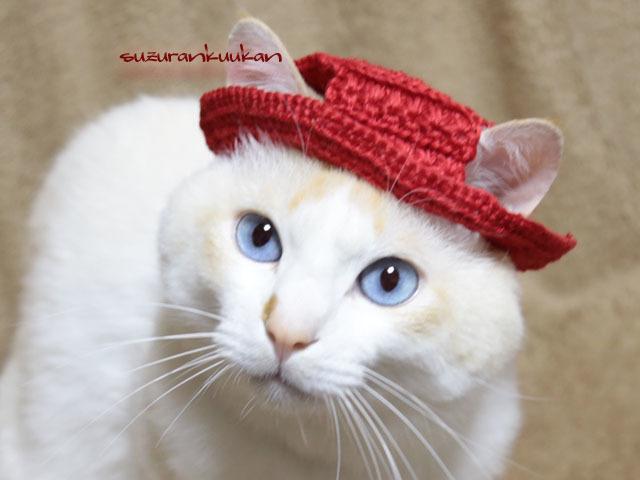 【猫用】編みカンカン帽3 2073<ピュ...