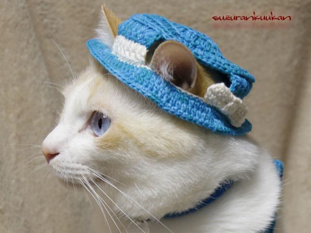 【猫用】カンカンハット<ターコイズブルー>