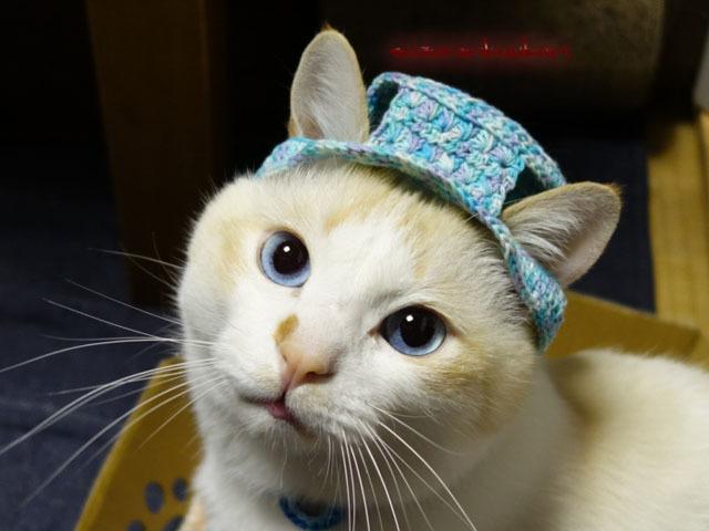 【猫用】編みカンカン帽3 2081<空藤...