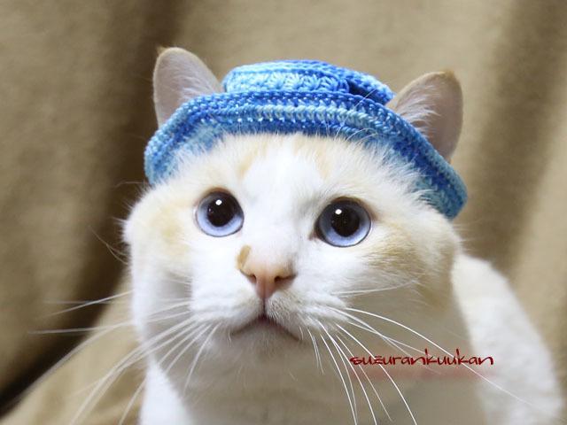 【猫用】編みカンカン帽3 2082<青空...