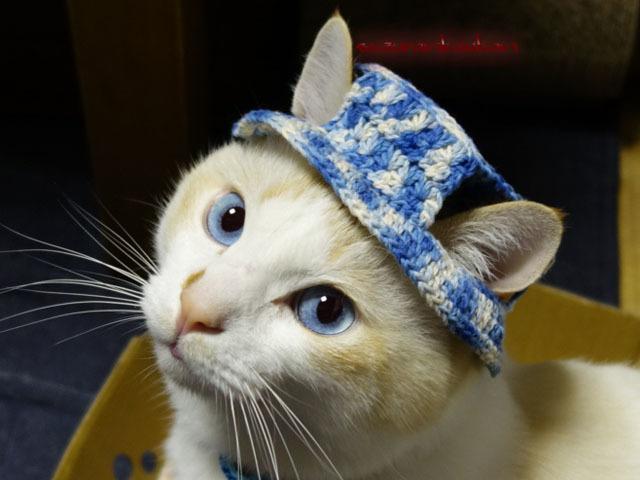 【猫用】編みカンカン帽3 2083<青系...