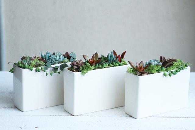 【NEW】スクエア陶器の多肉植物寄せ植えsmall