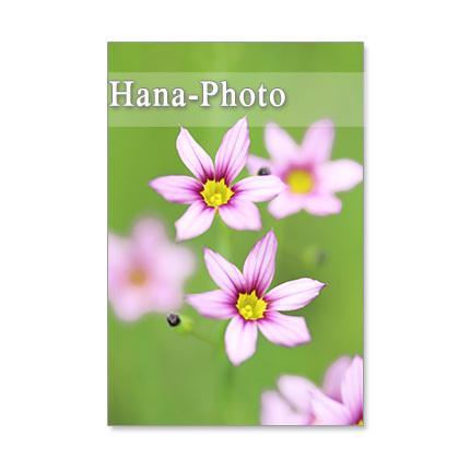 1245) 小さな野の花たち  ポストカー...