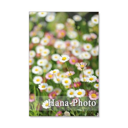 1244) 可愛い庭の花たち      ポストカ...