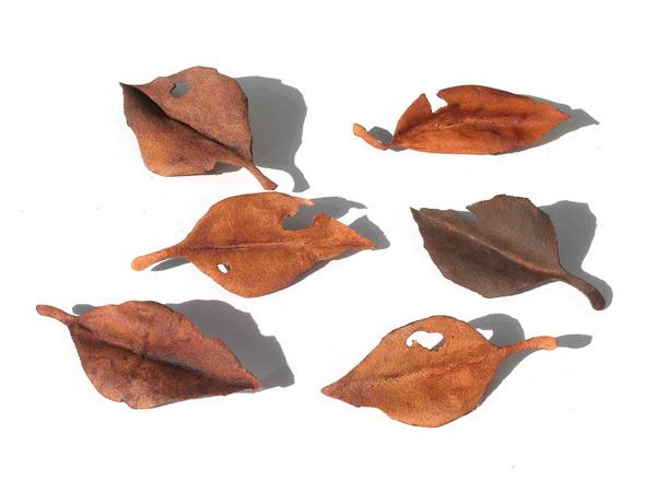 レザーブローチ【fallen leaves】type.6
