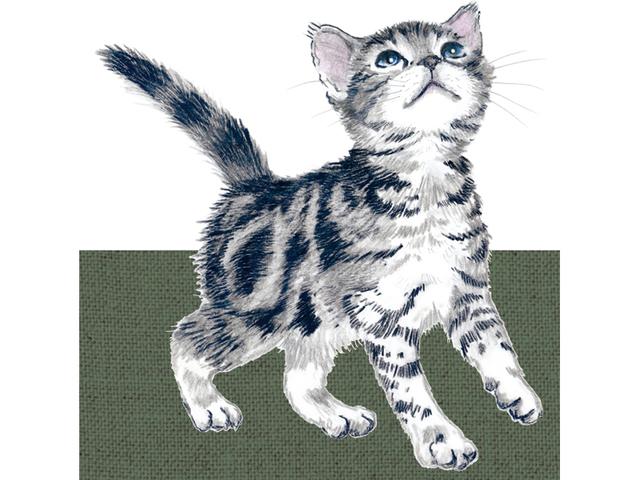 猫 パスケース アメリカンショートヘア イラスト B ハンドメイド