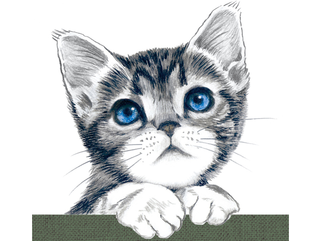 猫 パスケース アメリカンショートヘア イラスト A ハンドメイド