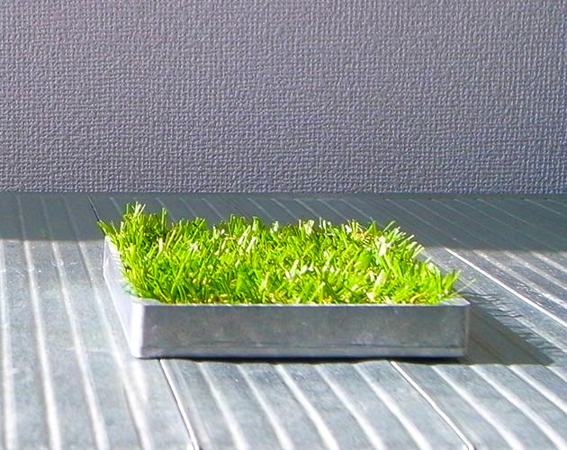緑(グリーン)の芝(植物)とアルミの小物...