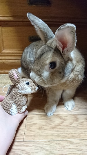 ペットをストラップに!(ウサギのふうた...