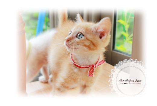 子猫写真葉書【まいん】2枚セット【送料無料】