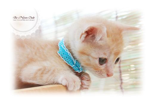 子猫写真葉書【こなん】2枚セット【送料無料】