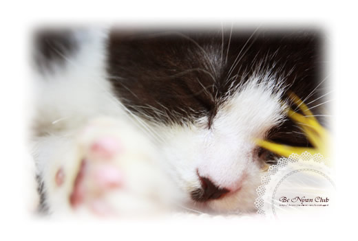子猫写真葉書【幸】2枚セット【送料無料】
