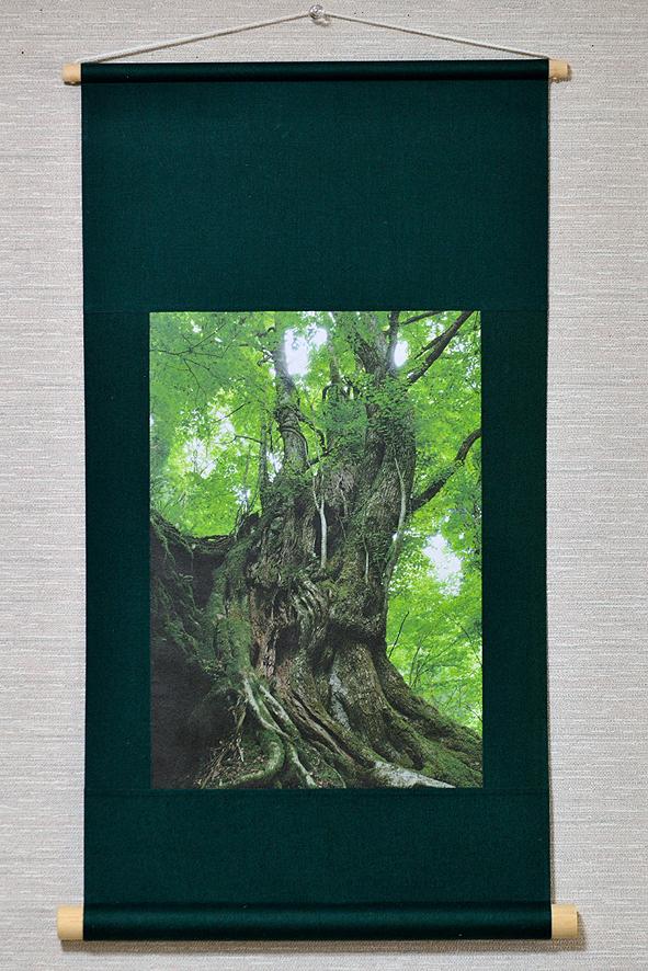 壁掛け 木・樹シリーズ「桂巨木」