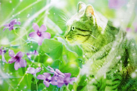キャンバスポスター【Spring Tender Winds】