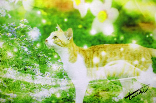 キャンバスポスター【Flower Rhythm】