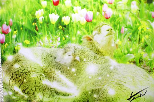 キャンバスポスター【Sleepy Garden】