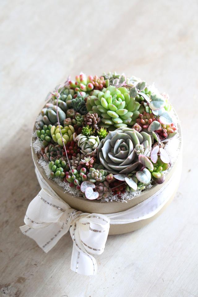 succulent box ー多肉植物ボックス