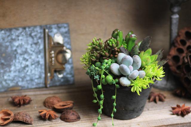 【NEW】グレーモスポット多肉植物寄せ植え
