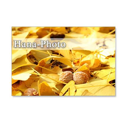 1254)秋の足音    ポストカード5枚組