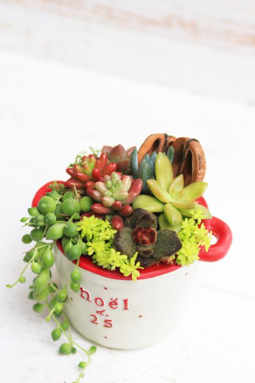 クリスマスカラーの多肉植物寄せ植え