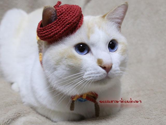 【猫用】ベレー帽セット<茶系>(穴あ...