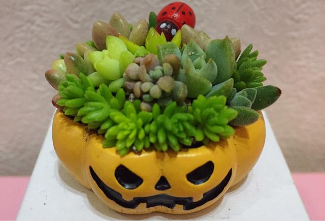 ハロウィンにピッタリ かぼちゃと多肉植物