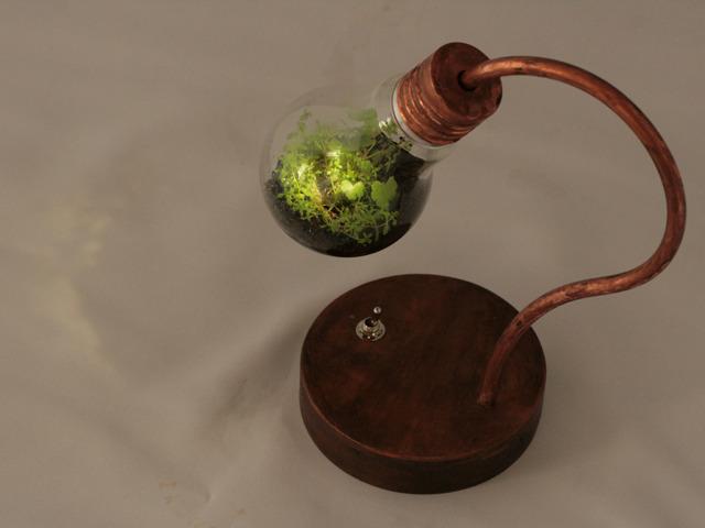 [R�ͤ��䤤��碌ʬ] bulb terrarium mini
