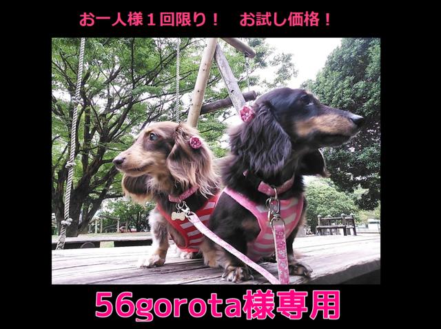 【56gorota様専用 ご注文ページ】お試...