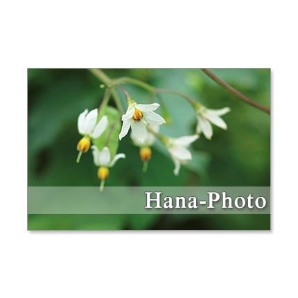 1259) 行き止まりに咲いていた花たち ...