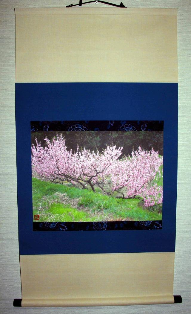 掛け軸:花桃満開
