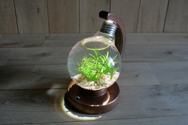 bulb terrarium ball [cool]