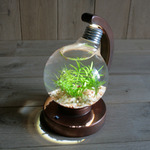 bulb terrarium ball [cool]