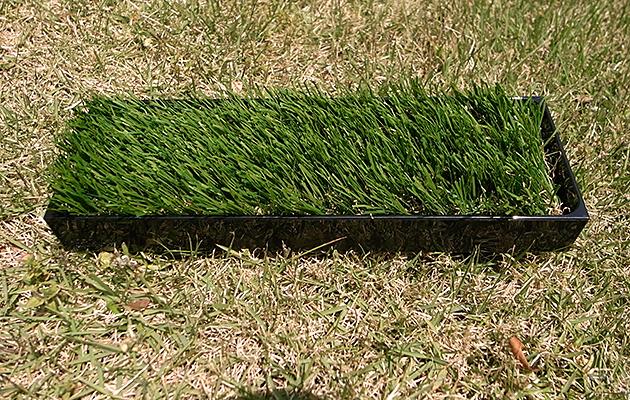 """緑(グリーン)の芝(植物)のグリーントレイ""""midori-PC"""""""