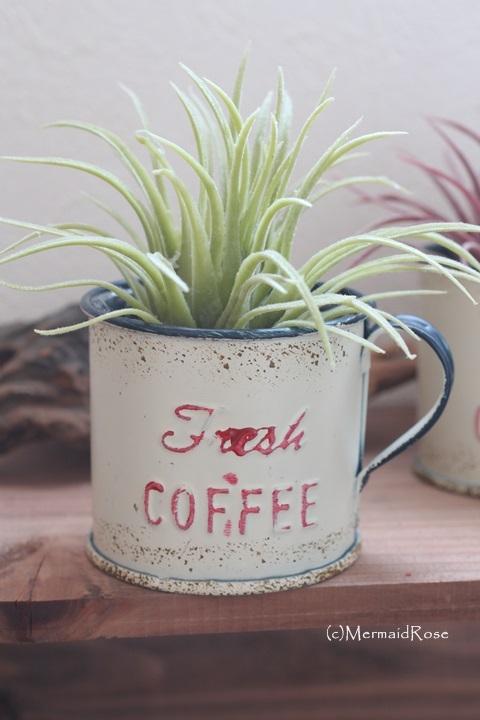 枯れない多肉チランジアS*ライトグリーンinコーヒーカップ