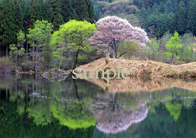 プリント水辺シリーズ 華やかな池