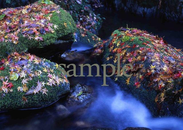 プリント水辺シリーズ 秋彩の沢