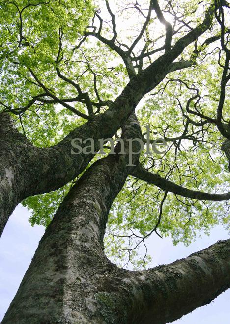 プリント樹シリーズ 活力