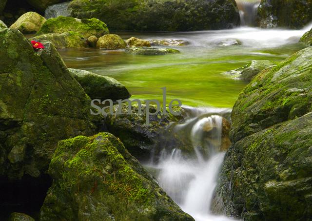 プリント水辺シリーズ 緑流