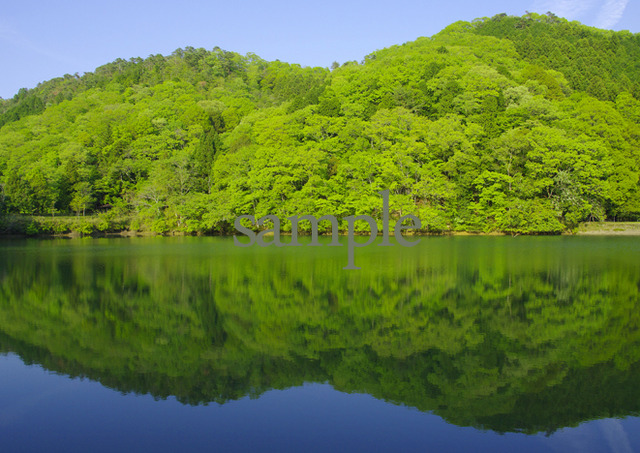 プリント水辺シリーズ 新緑の頃