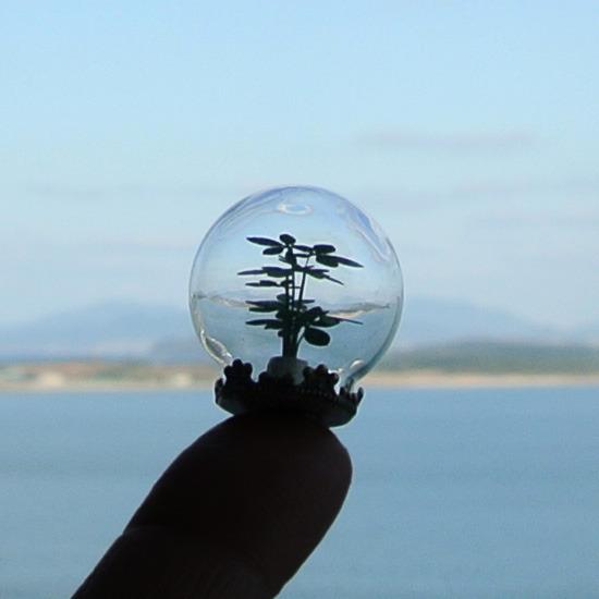 ガラスドームの観葉植物02カポック