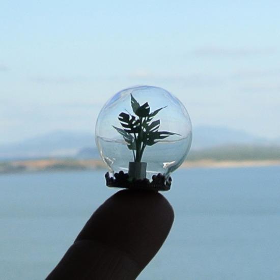 ガラスドームの観葉植物01モンステラ