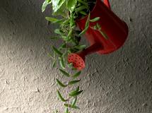 赤いジョウロの寄せ植え