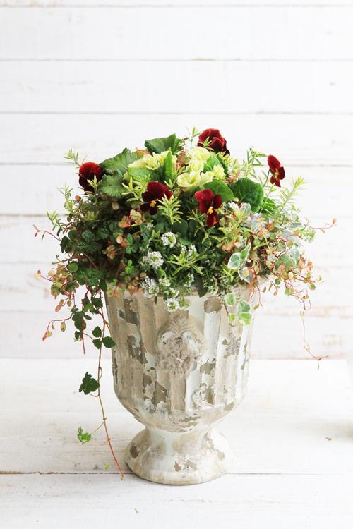 【1点もの】ゴブレット鉢のアンティーク風寄せ植え-季節の花の寄せ植え-