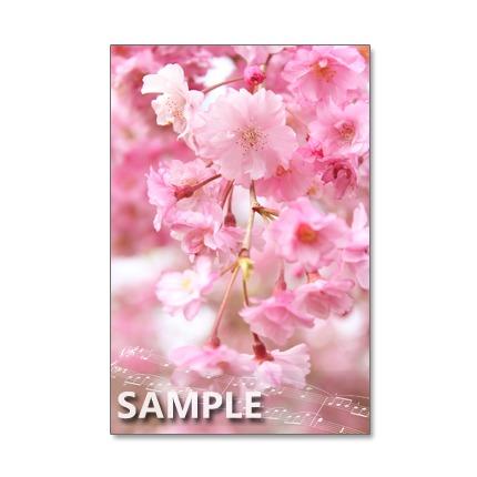 1039)セット 5枚選べるポストカード 色とりどりの桜・さくら・サクラ