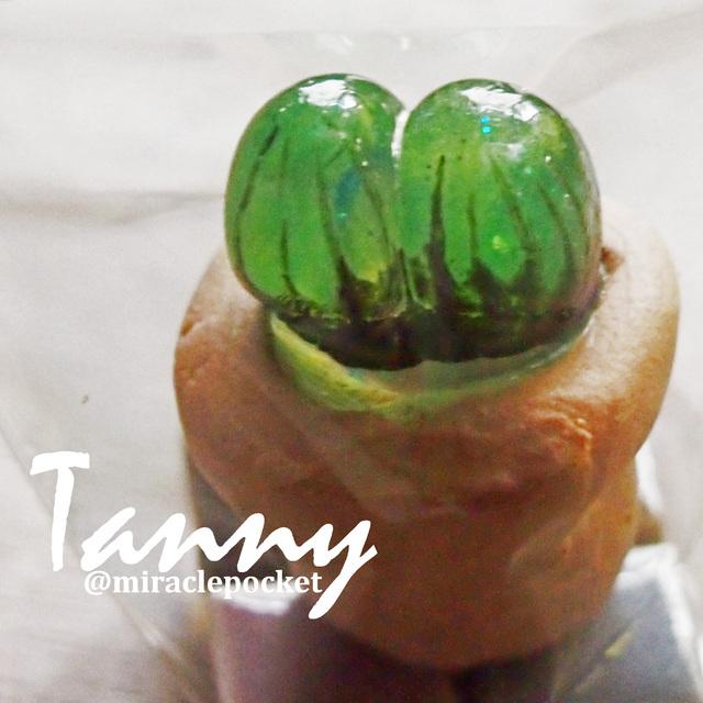 多肉植物TANNY01