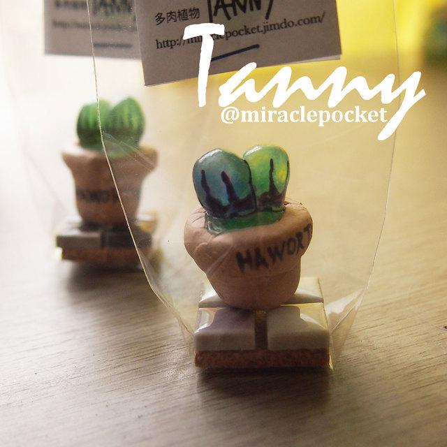 多肉植物TANNY★B