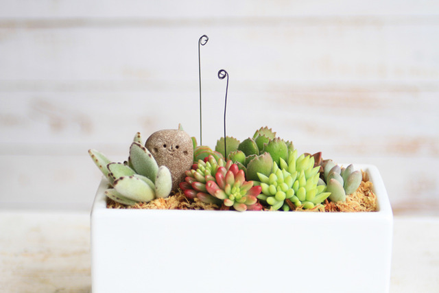 角丸さんと多肉植物寄せ植え