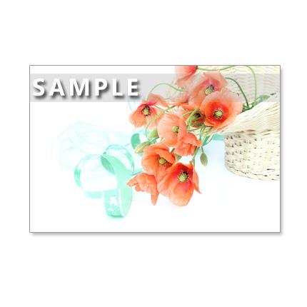 124)Postcard 5枚組 優しげな春の野の花たち