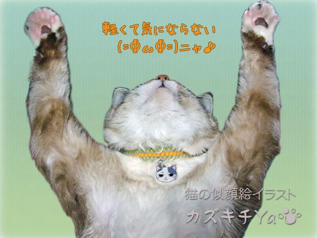 猫ちゃんの迷子札(5個以上ご注文)
